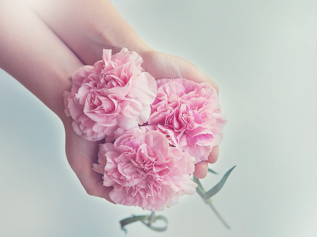 Beautiful pink flowers held in girls hands.
